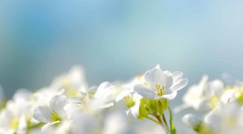 Flores brancas💐⚪ no dia de finados